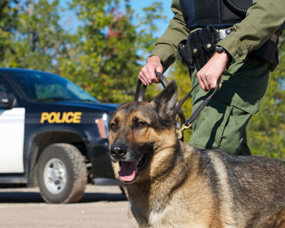 Drug-Sniffing Dogs & Probable Cause: Supreme Court Considers